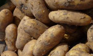 patata_09