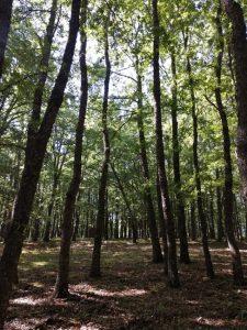 Gargano Foresta Umbra © Nicoletta De Rossi